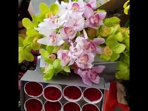 Orhideje - Beograd, Zemun