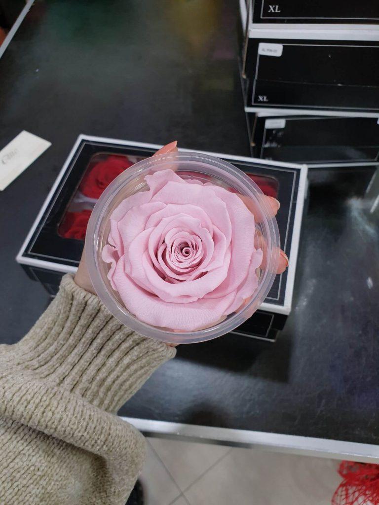 roze dehidrirane ruže beograd