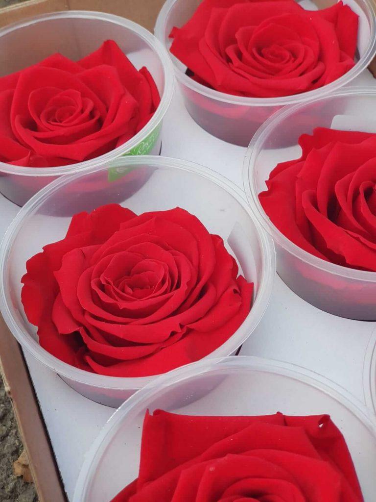 crvene dehidrirane ruže