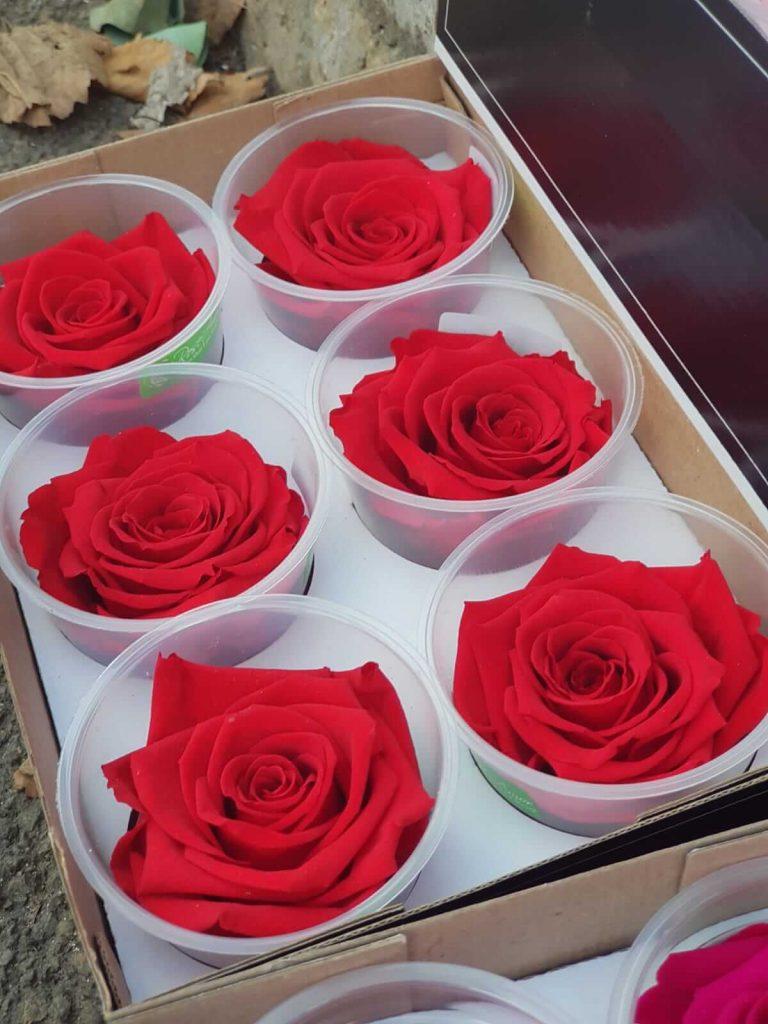 cvećara elite crvene dehidrirane ruže beograd