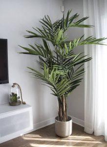 sobno cveće koje prečišćava vazuh - bambus palma