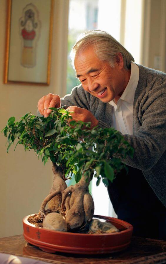 bonsai nega
