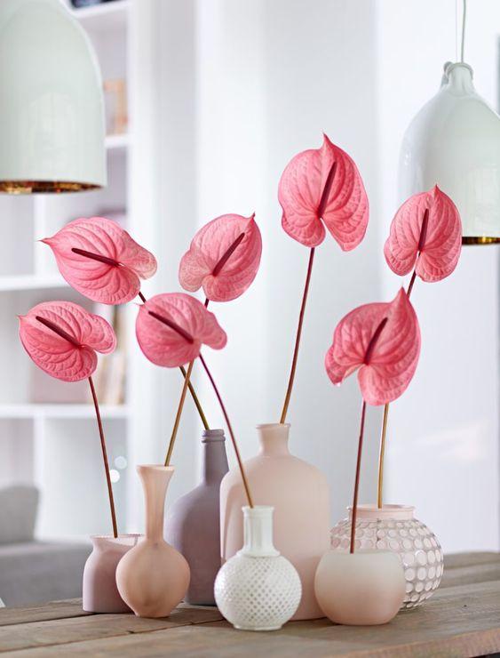 roze anturijum u vazama