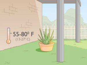 idealna temperatura za aloa veru